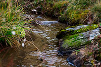 Самая чистая и живая родниковая вода в горах мира